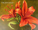 Tiger Lily by Robyn Brooks